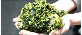 栄養素がカラダに吸収されやすい天然青汁